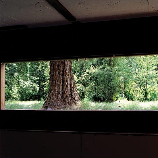 tree-large.jpg