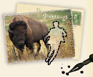 Postcard 300x249
