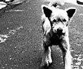 cute-puppy.jpg