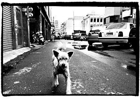 _1-running-dog-450.jpg