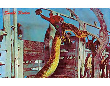 89rattlesnake-rodeo385x300