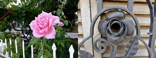 Rose of Bulgaria.jpg