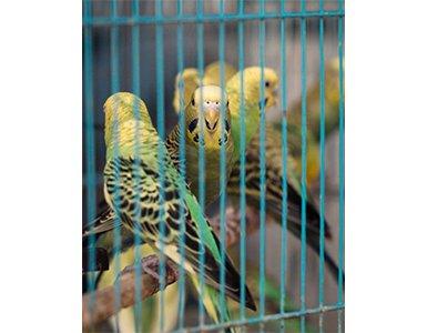 61strange-birds385x300.png
