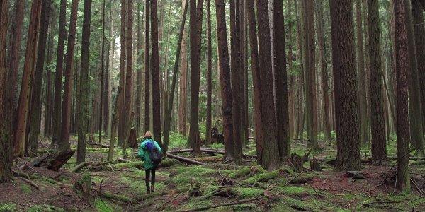 forestmovie