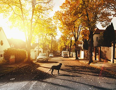 108-dog-leaving-home-380x300