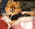 dogshow-teaser.jpg