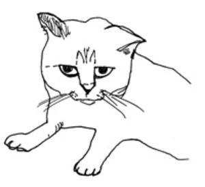 dezwart-cat.jpg