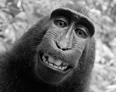 110_monkey-380x300