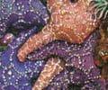 starfishteaser.jpg