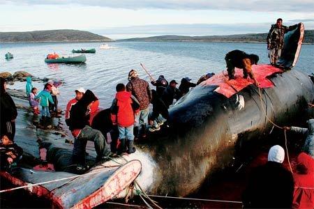 whole-whale-450.jpg