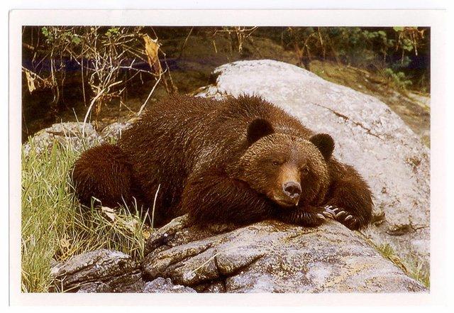 grizzlybill.jpg